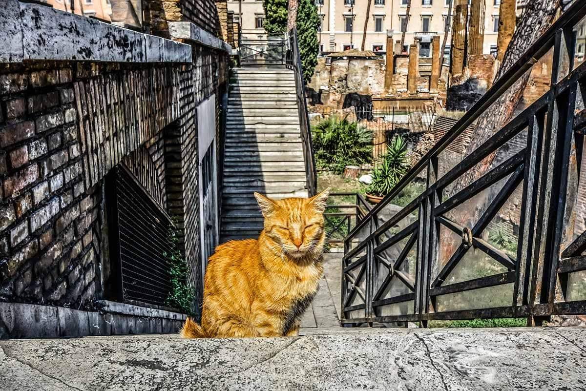 3 days in rome-cat sanctuary