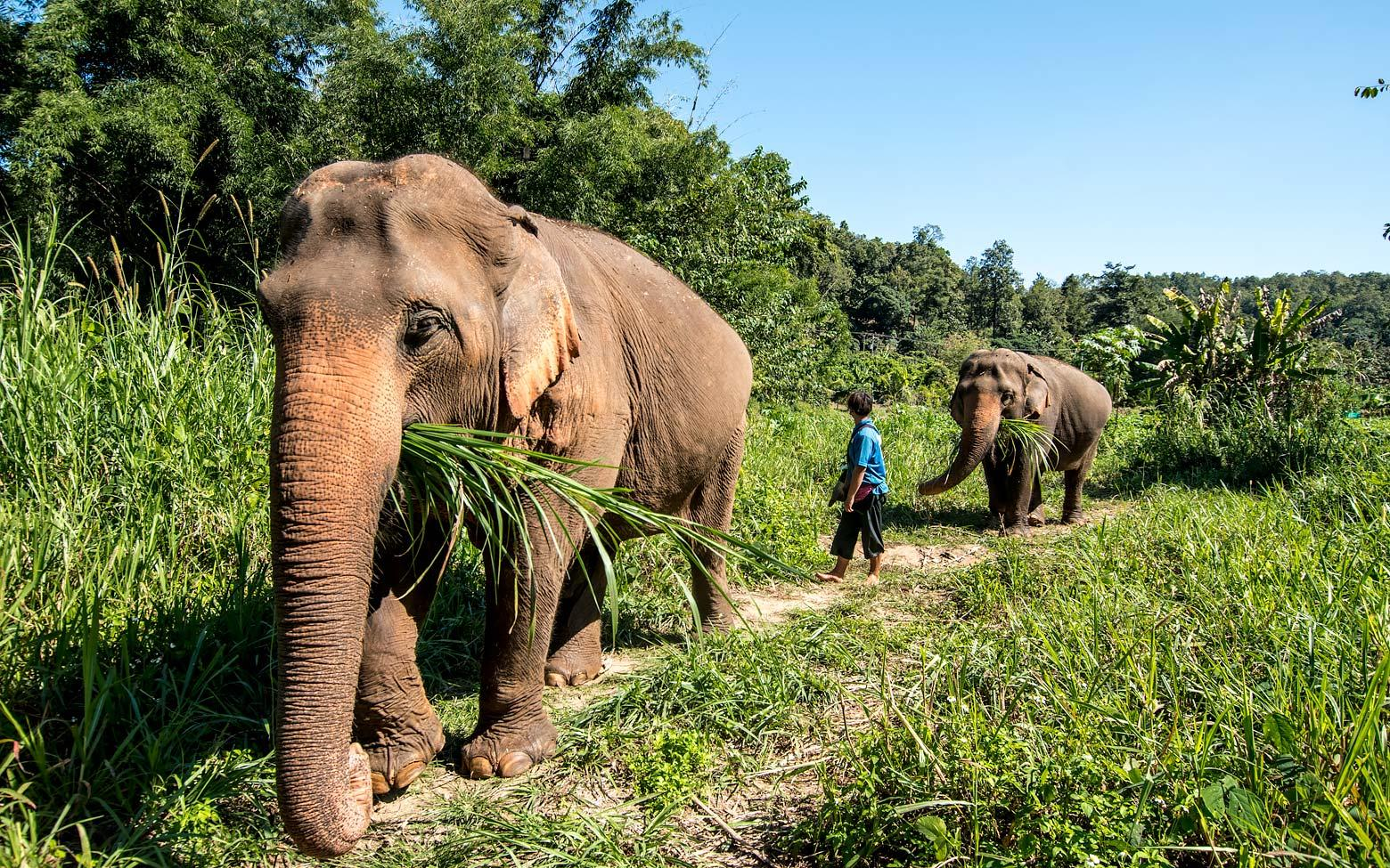 On the Elephant Trails – Elephant Nature Park, Chiang Mai, Thailand