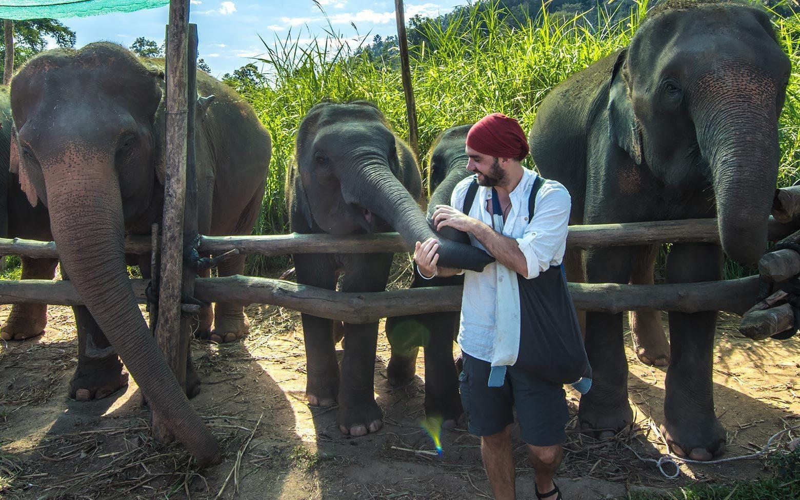 feeding elephants in elephant nature park