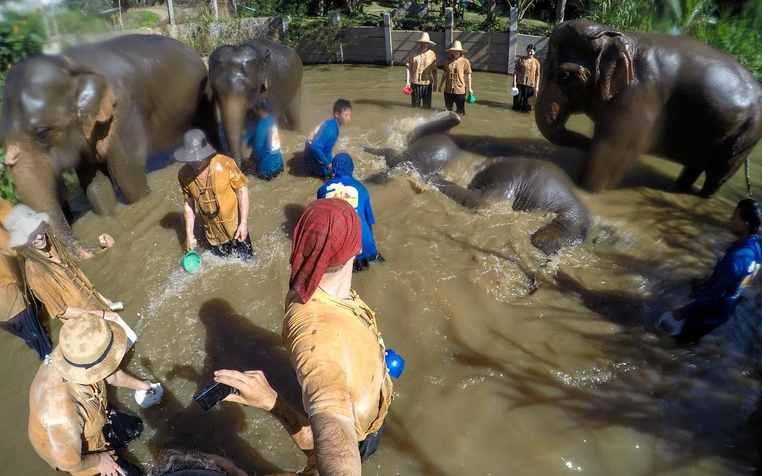 bathing an elephant in chiang mai