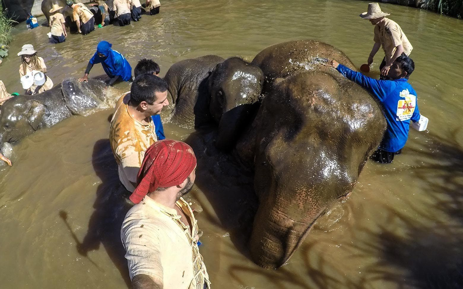Elephant Trails project | bathing an elephant in chiang mai