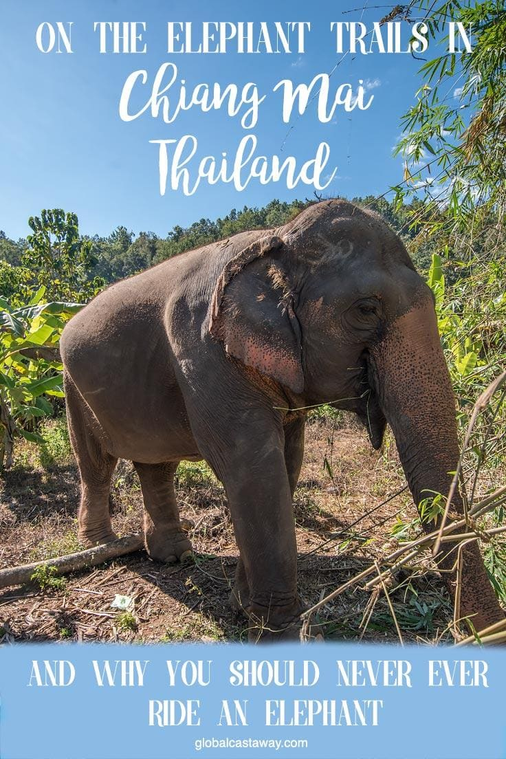 On the elephant trails in chiang mai and why you should never ever ride and elephant | Find out why elephant riding is bad and see what to expect on your own Elephant Trails adventure