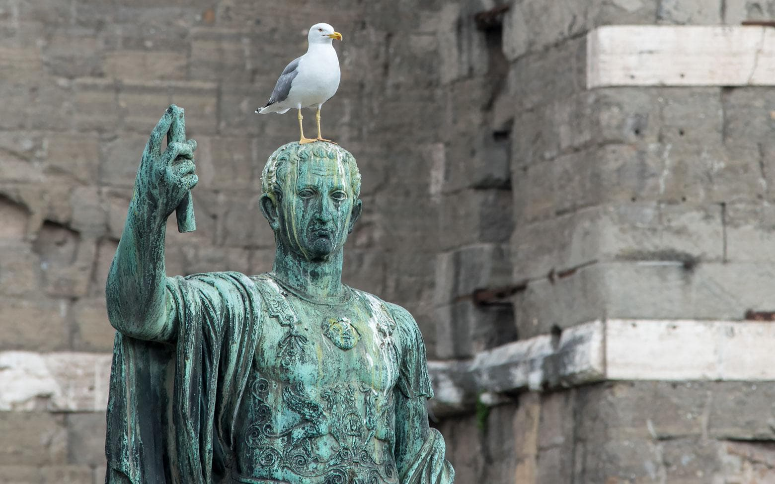 seagul on top of a statue in rome