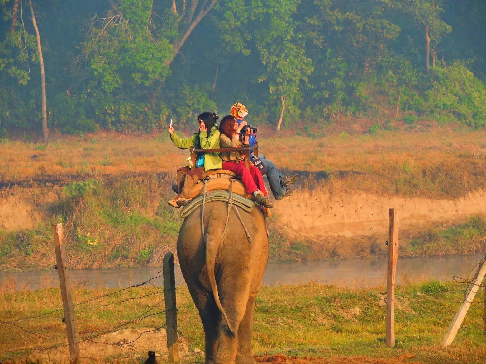 Elephant nature park's project - elephant trails spread awareness against elephant riding