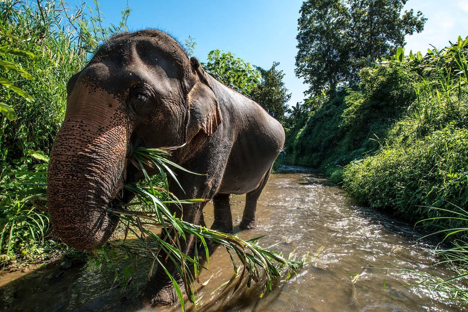 Elephant part of the Elephant Nature's Park project - Elephant Trails
