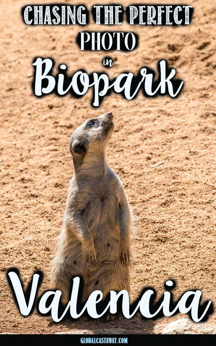 25 pictures to inspire you to visit the best zoo in europe - bioparc,Valencia