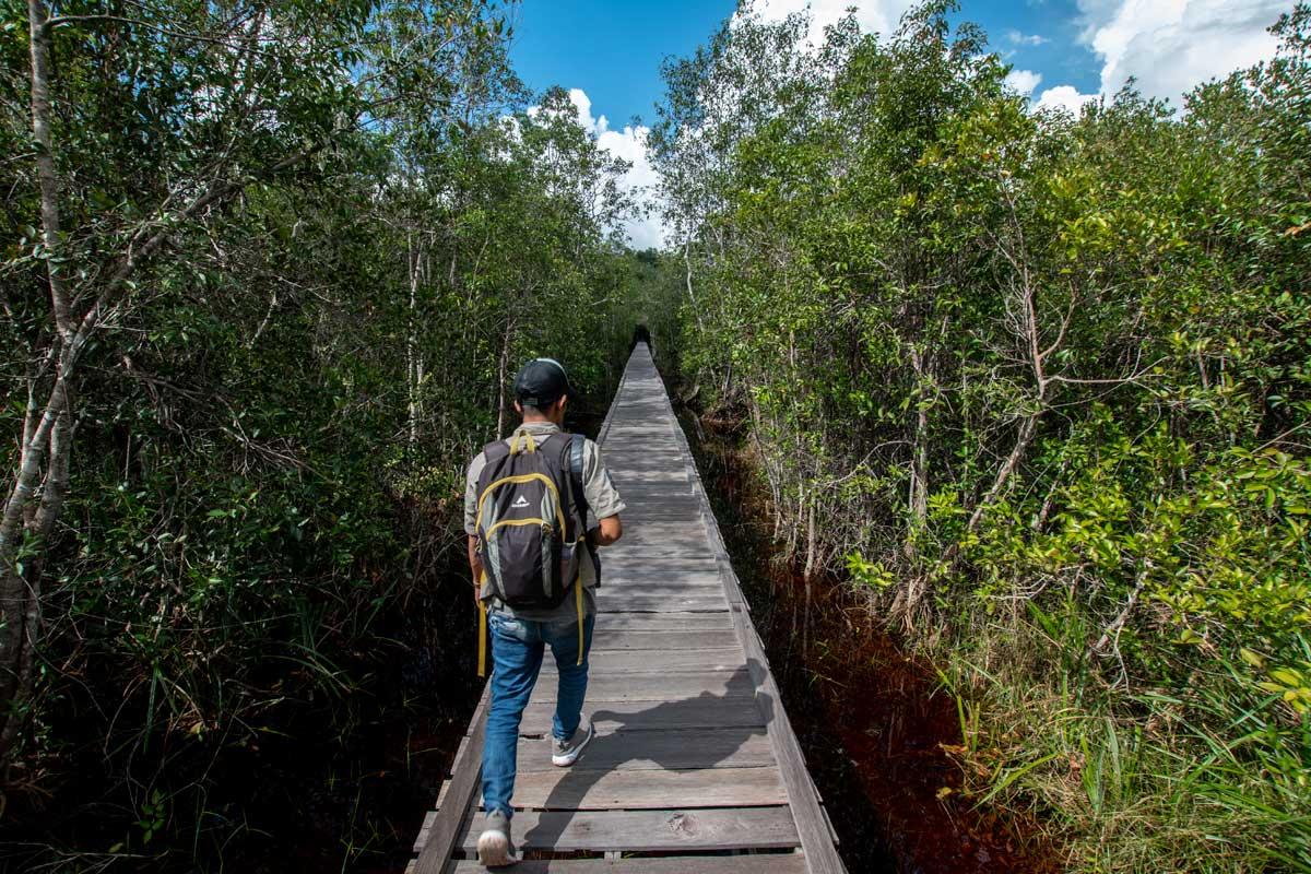 orangutan tour - camp leaky path