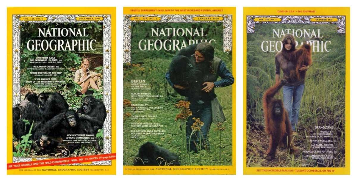 Borneo Orangutan Tour - the trimates