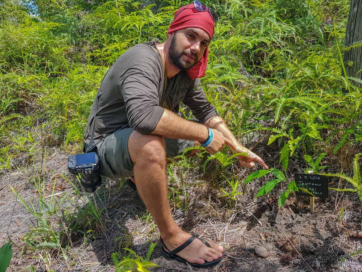 plant a tree in borneo