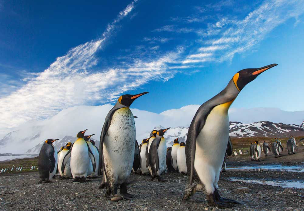 bucket list ideas - antarctica penguins