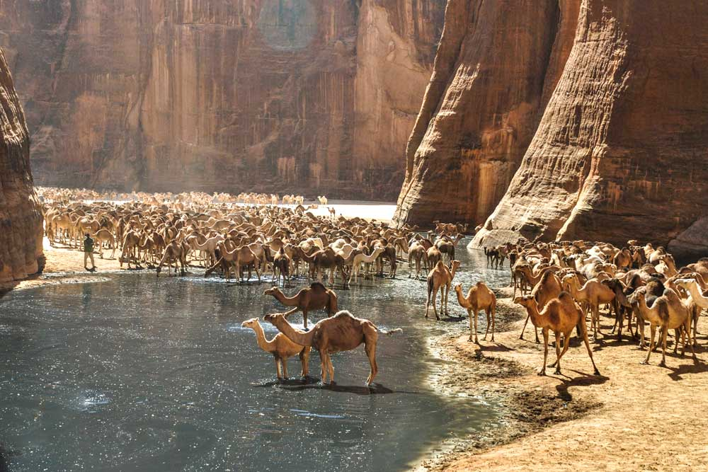 ultimate bucket list ideas - chad camels