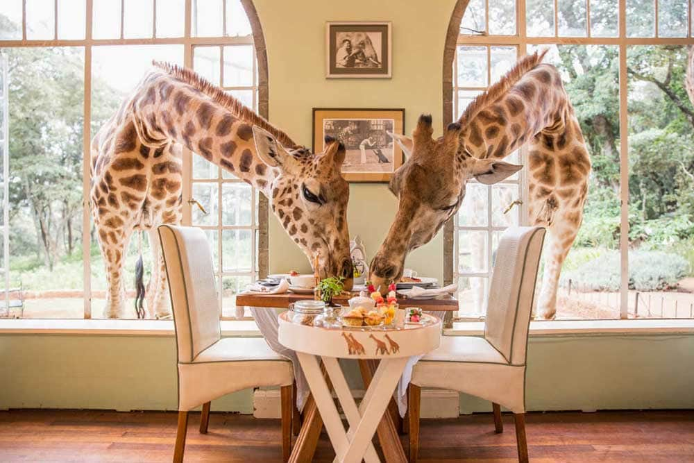 bucket list ideas - giraffe manor in Kenya