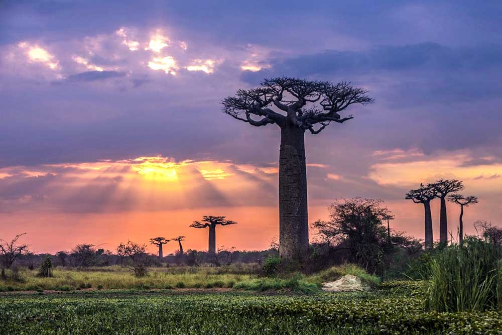 bucket list ideas - Baobabs in Madagascar