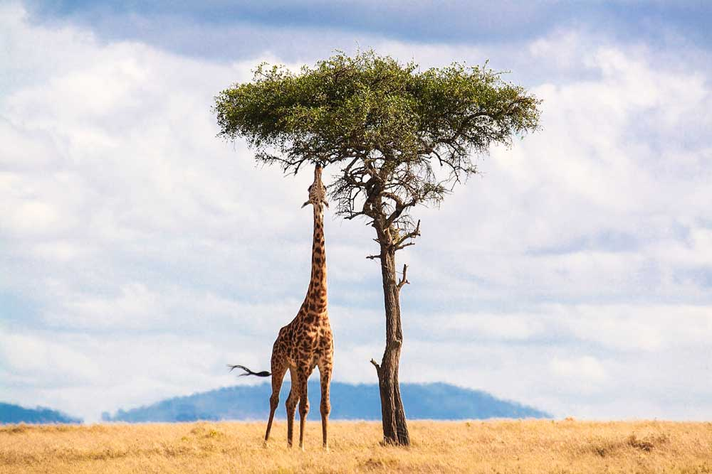 ultimate bucket list ideas - south africa giraffe