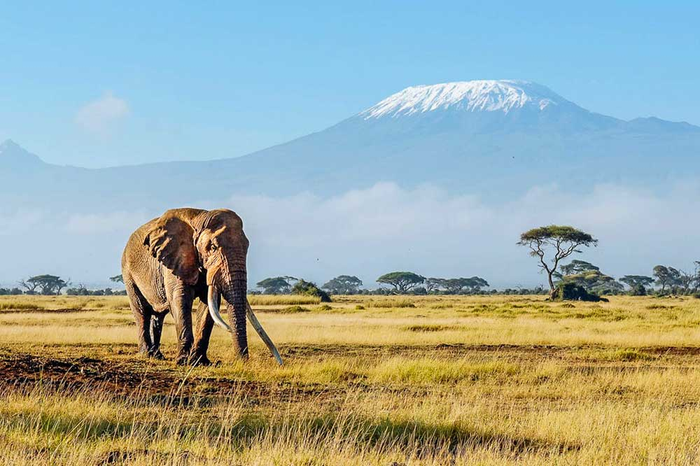 bucket list ideas - climb kilimanjaro