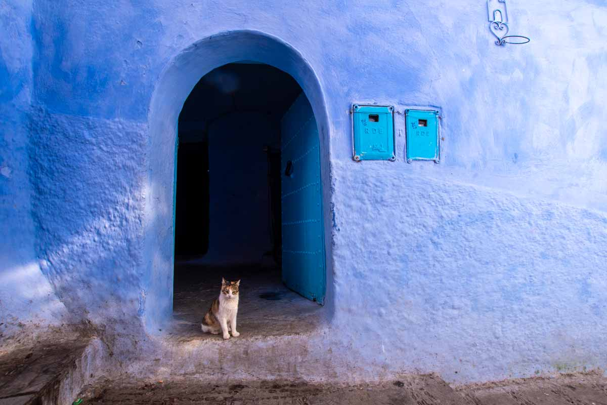 chefchaouen photo guide cat