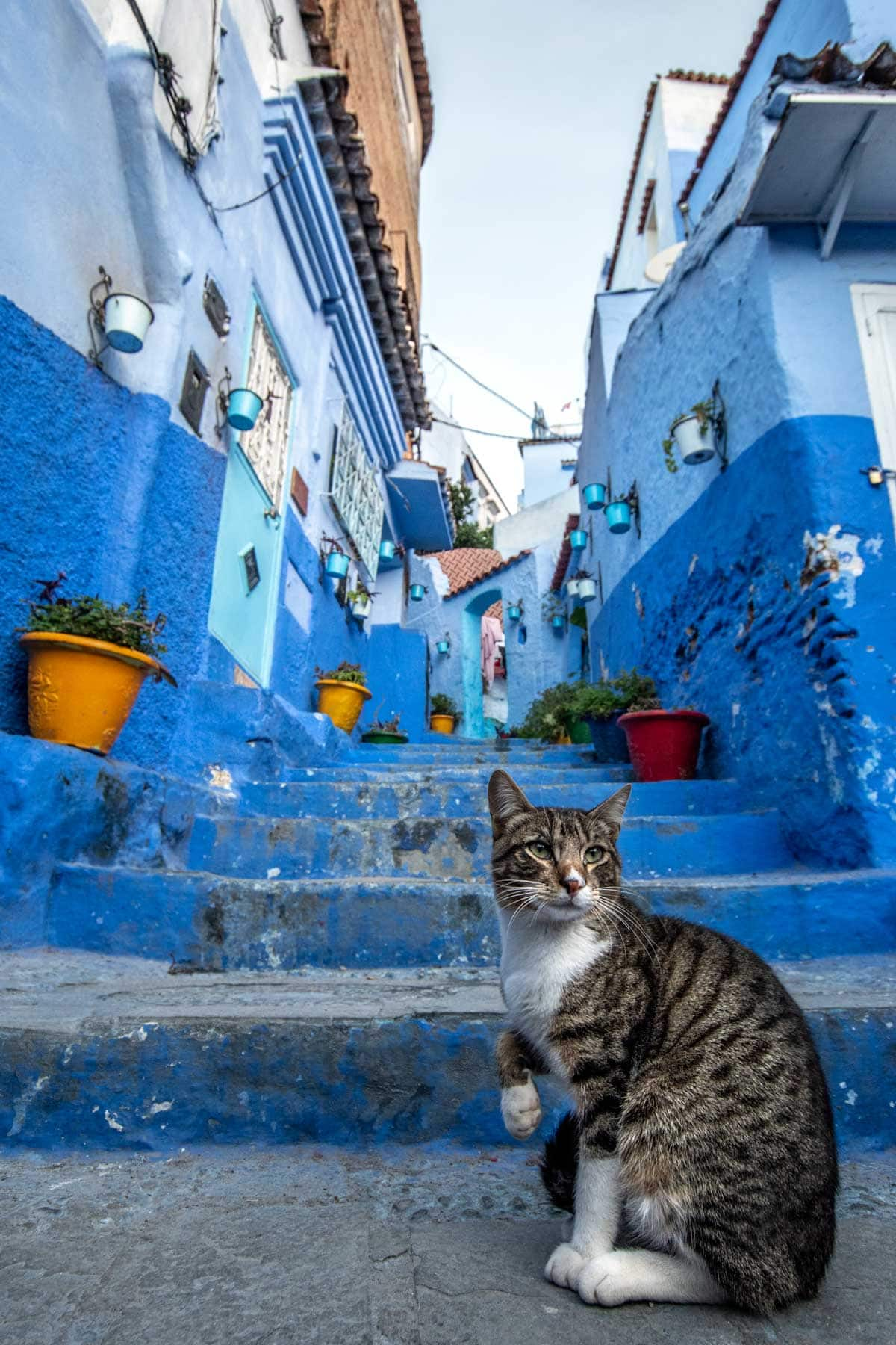 chefchaouen photo guide - cat model