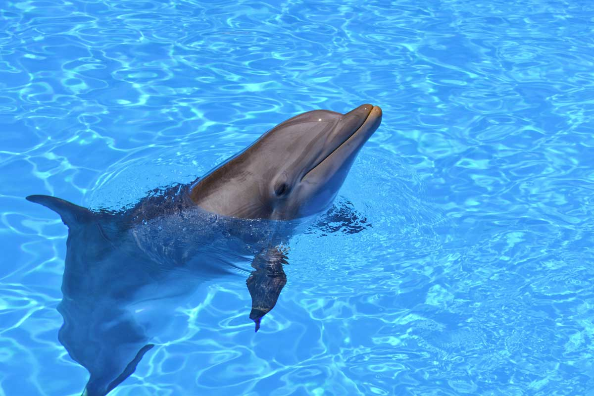 what not to do in lisbon - dolphin shows