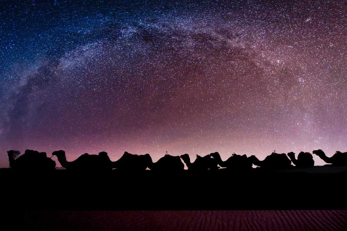million stars of the Sahara Desert with camel silhouetes