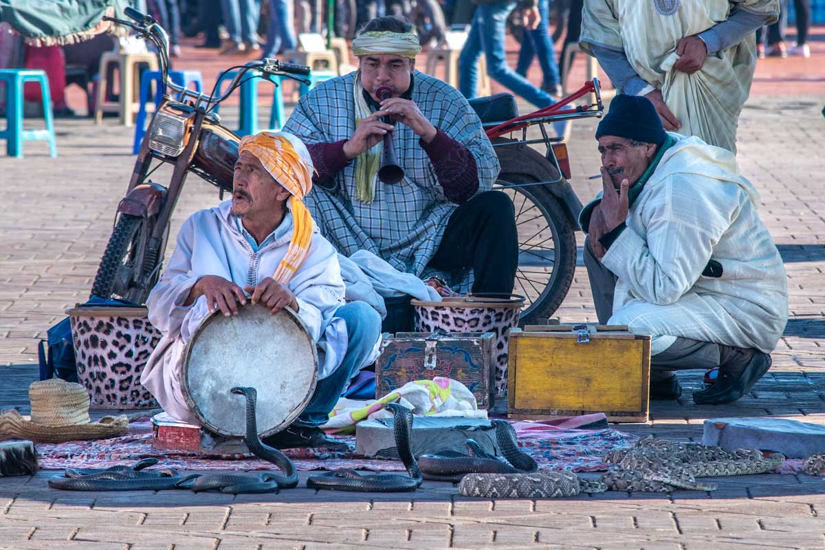 three snake charmers on the Marrakech sqaure with a few snakes in front of them