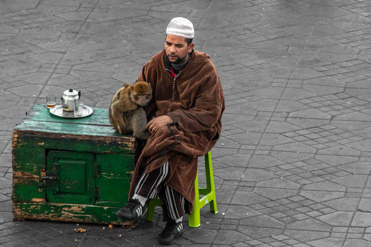 What not to do in Marrakesh-say no to the monkey tamers