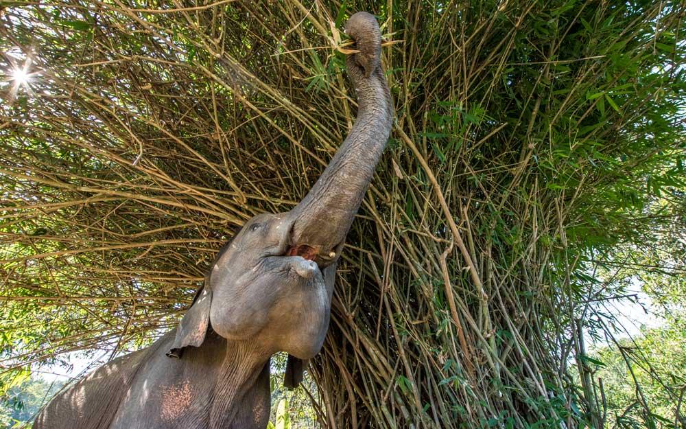 Thailand itinerary - elephant fun