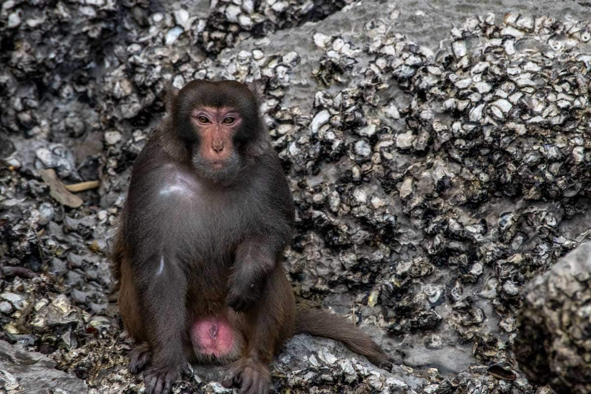 Halong Bay monkey