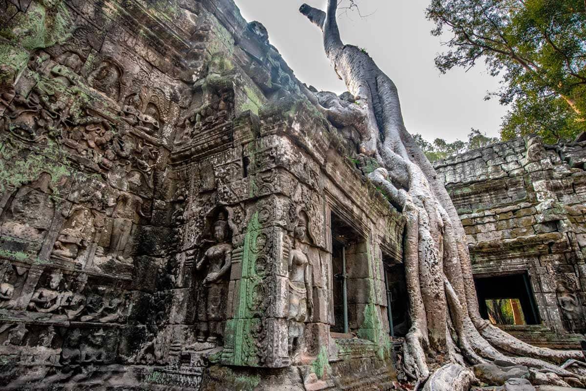 Siem Reap temples -Ta Prohm