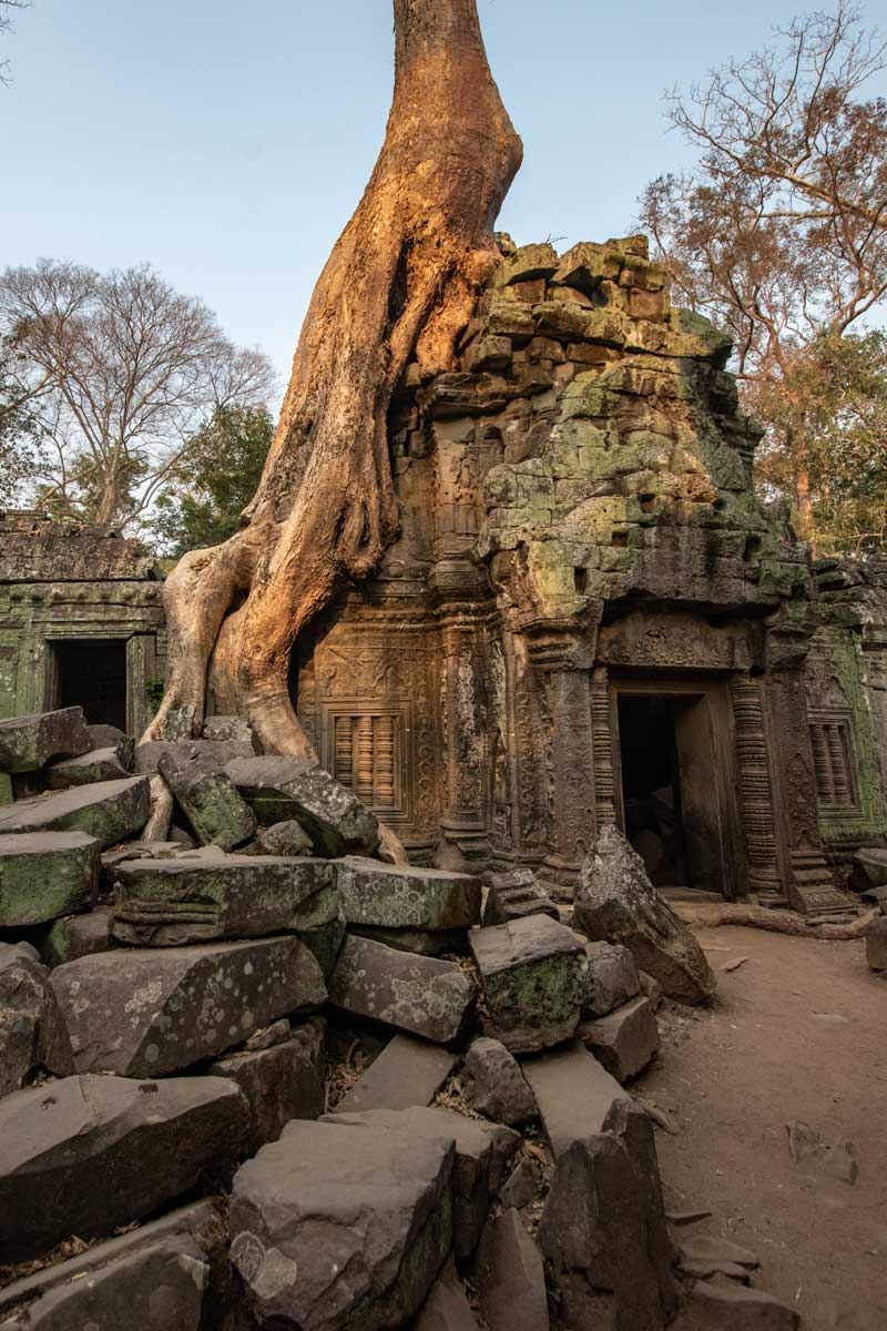Ta Prohm temple - Siem Reap