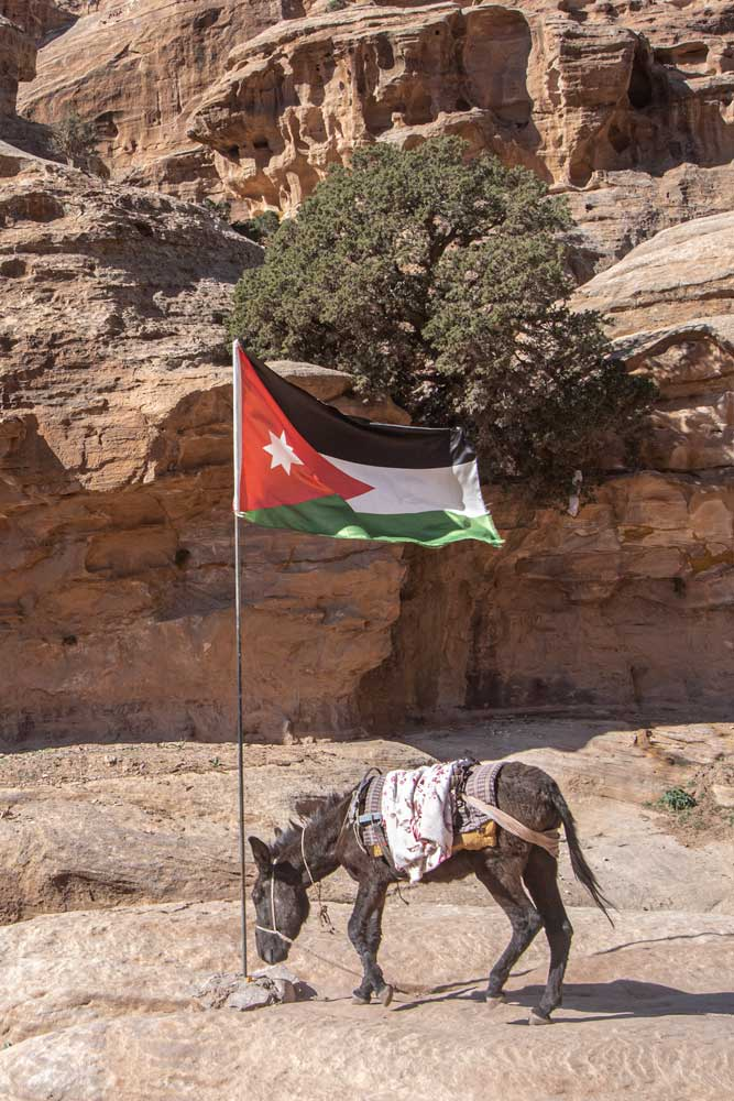 Donkey with the Jordanian flag