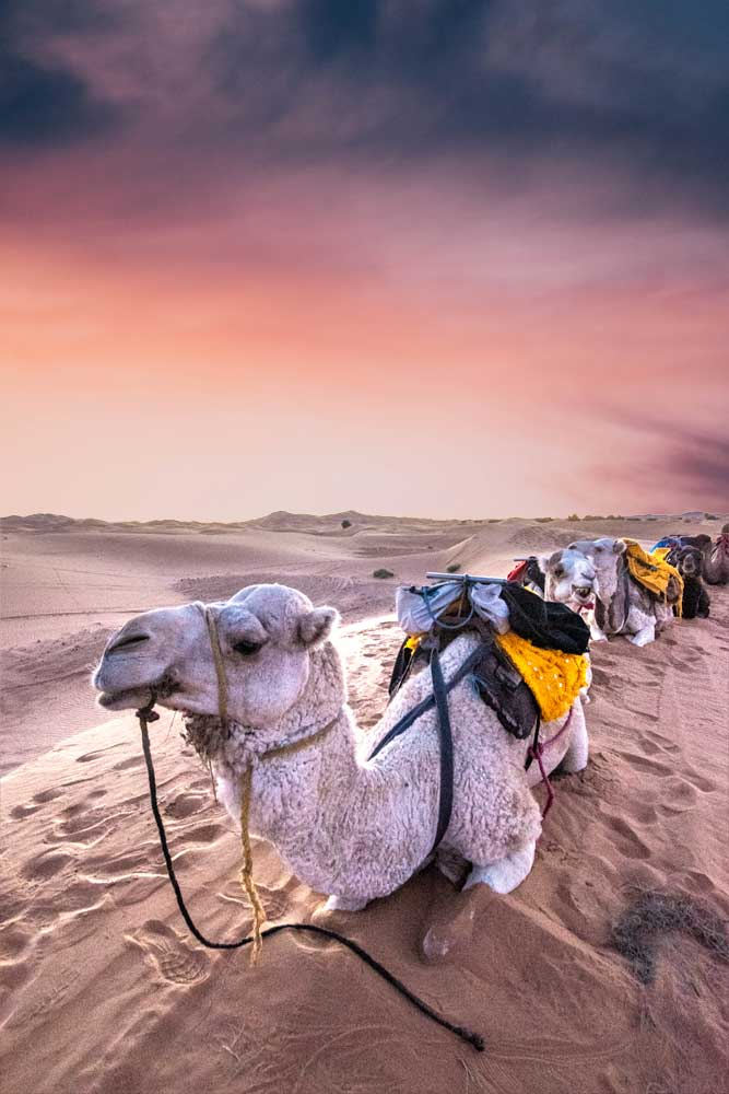 Should you go to the Sahara desert in December