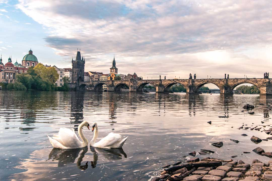 Prague-photo-guide-swan-spot