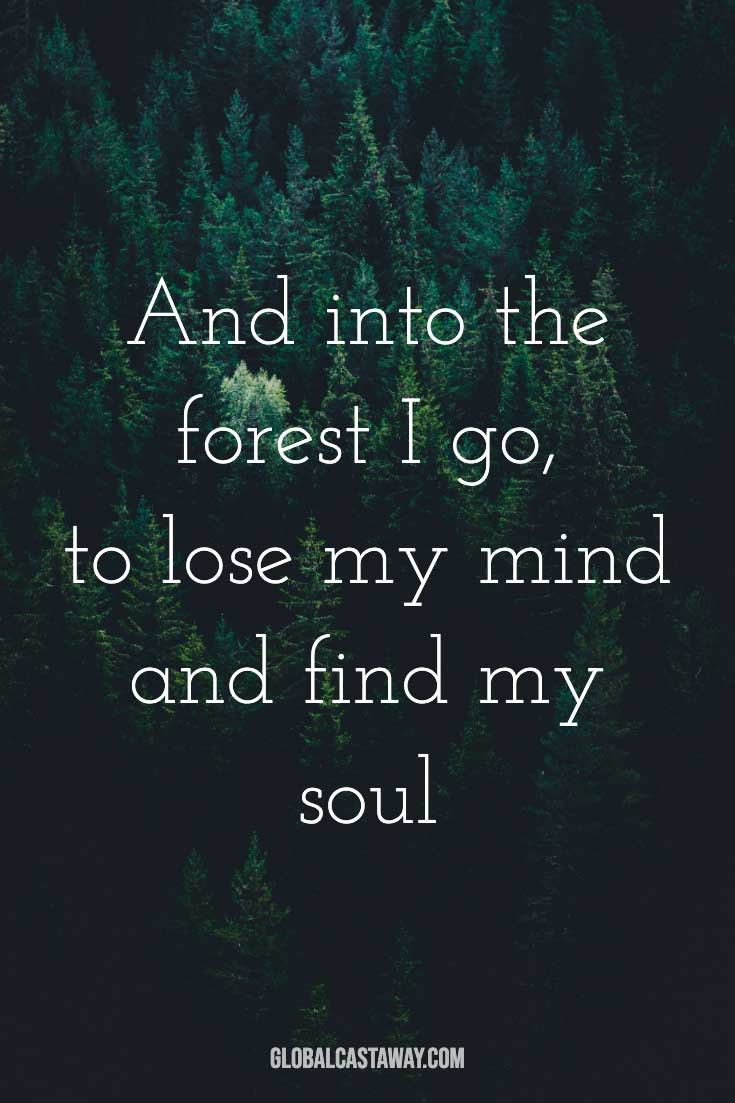 and-into-the-forest-i-go-to-lose-my-mind-and-find-my-soul