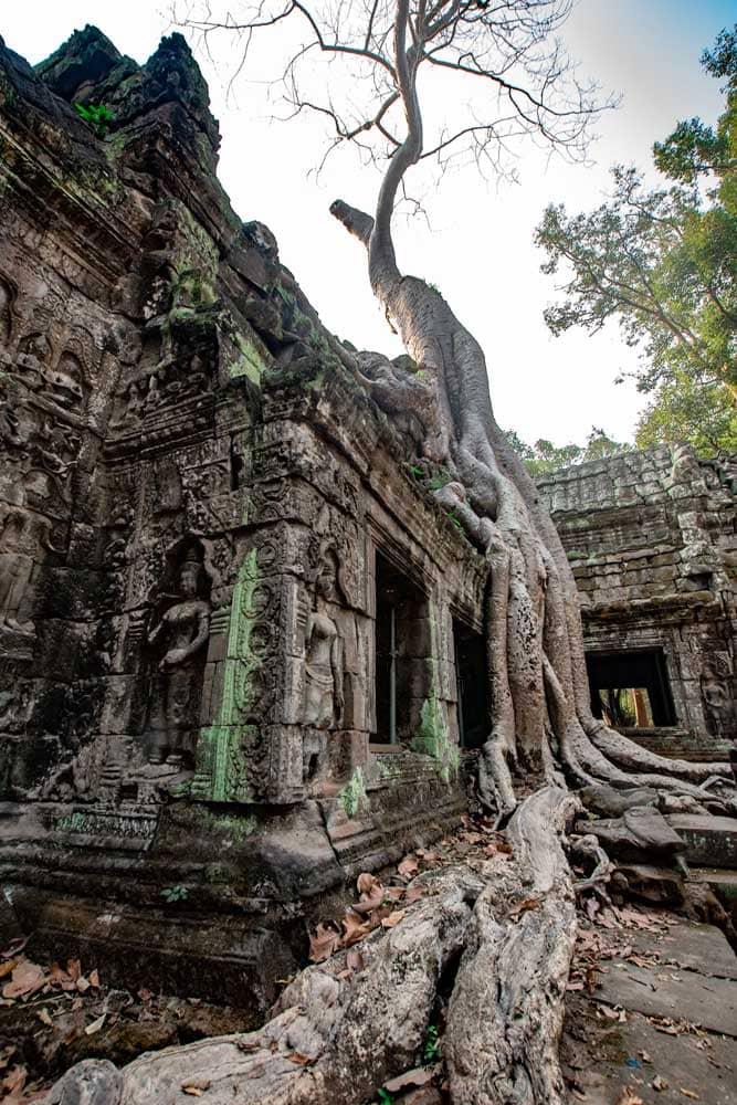 angkor-wat-itinerary-ta-prohm