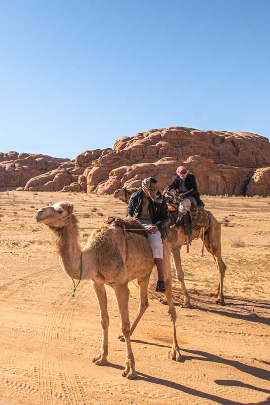 camels-in-wadi-rum