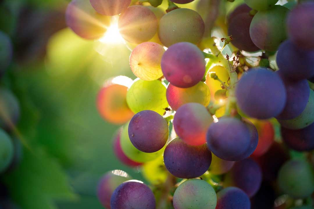 grape-up-close