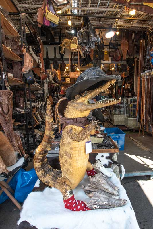 crocodile-at-chatuchak-market