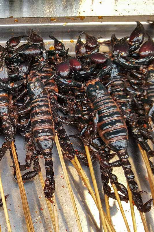 scorpions-on-a-stick