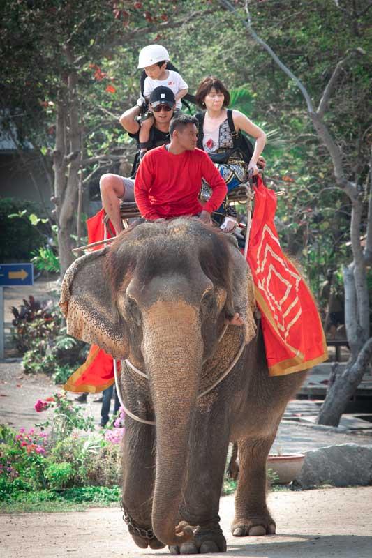 tourist-riding-an-elephant