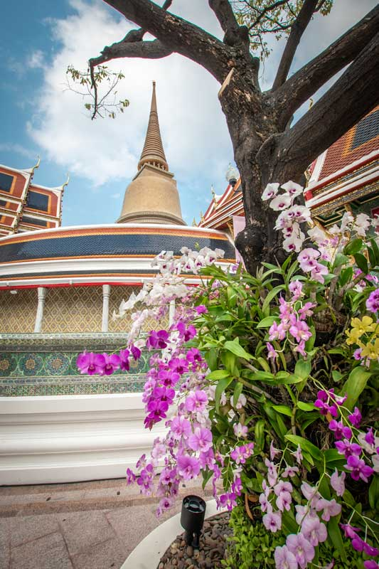 when-to-visit-bangkok