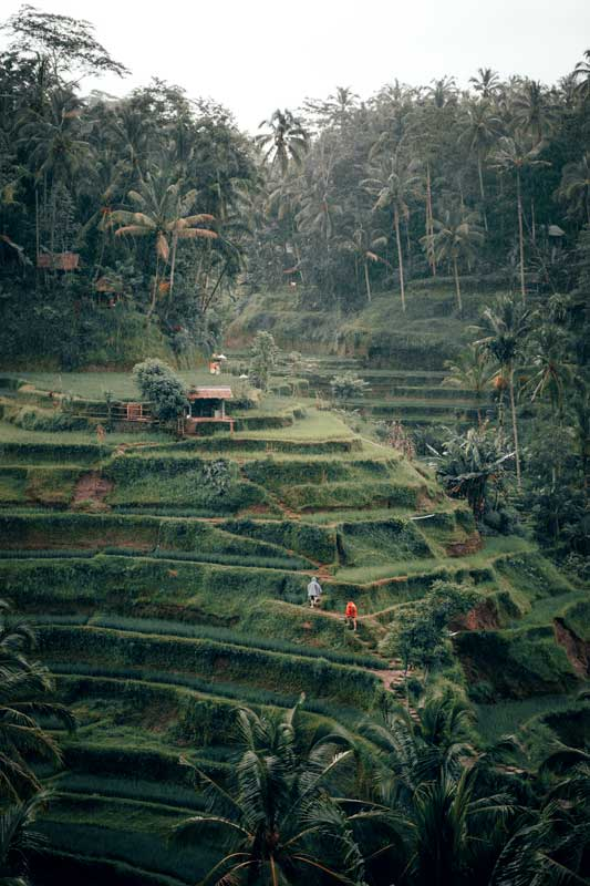 bali-rice-terraces