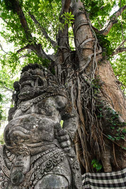 indonesia-landmarks-monkey-forest