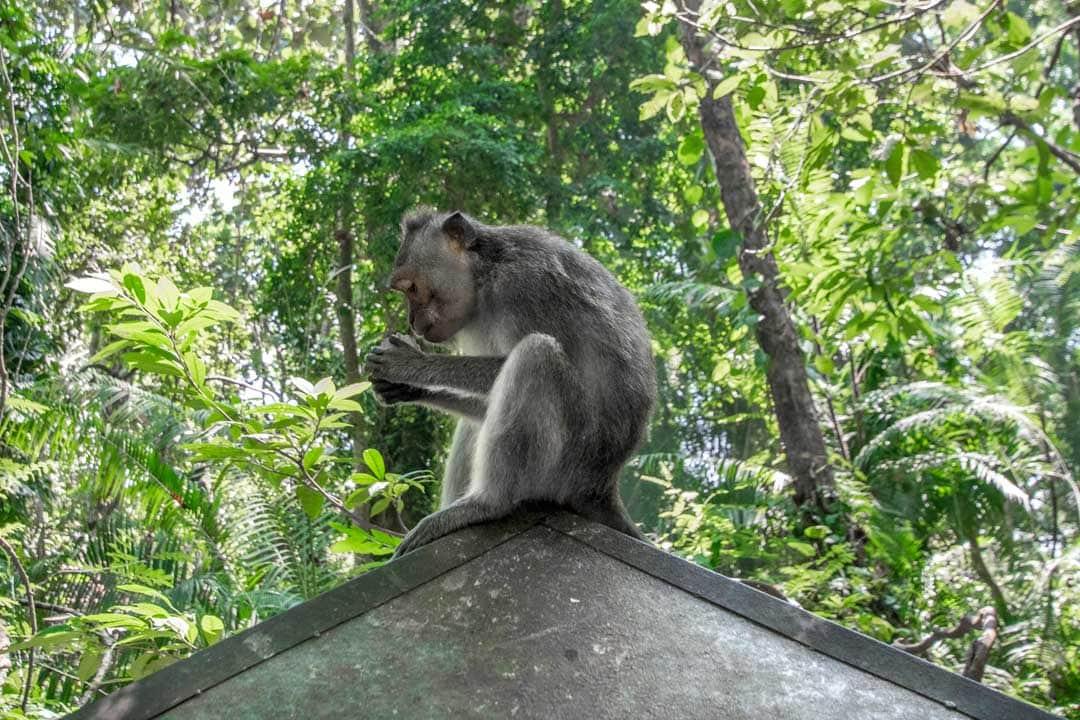 monkey-forest-in-Ubud