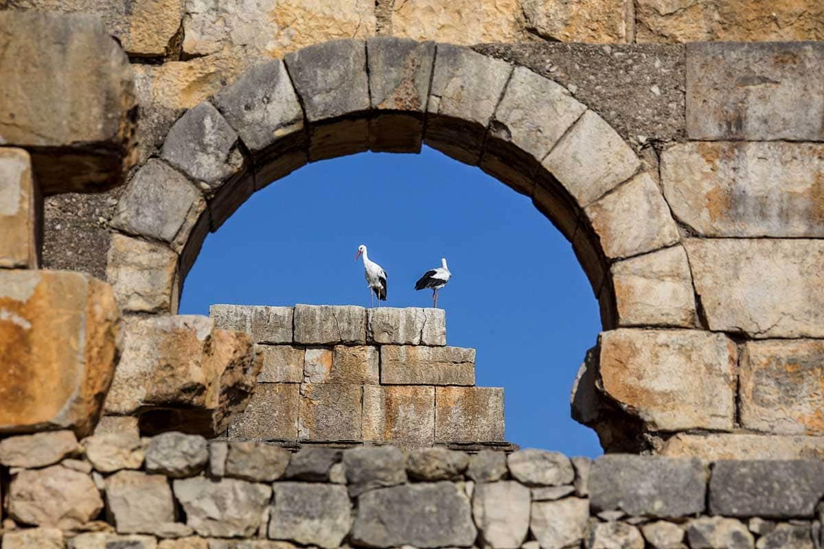 storks-in-volubilis