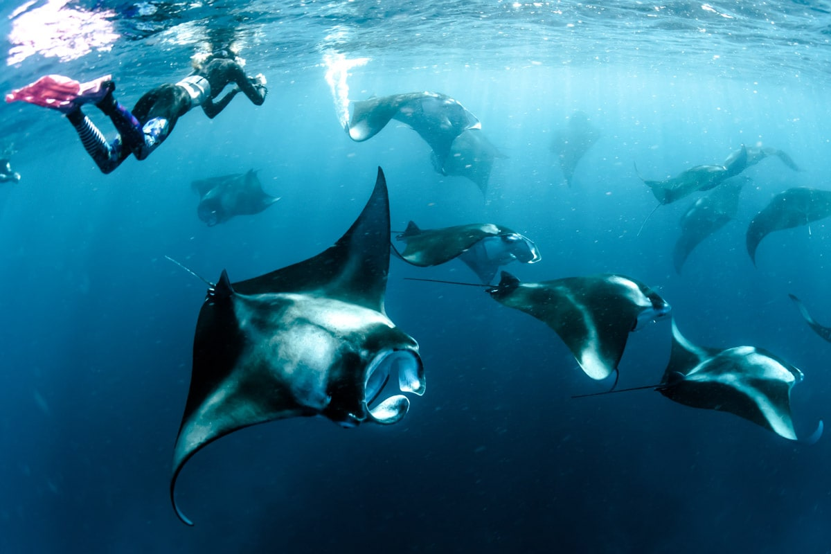 fun facts about bali--tropical paradise-manta-rays
