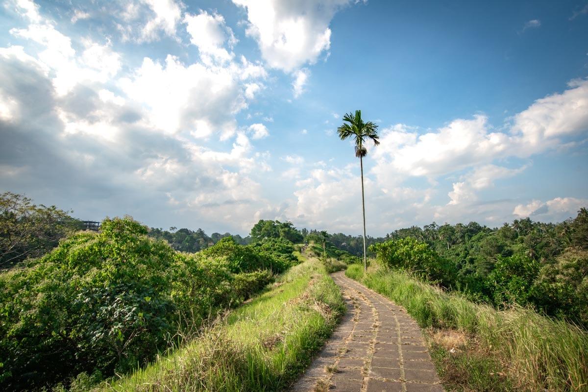 bali-bucket-list---lone-palm-on-the-ridge-walk