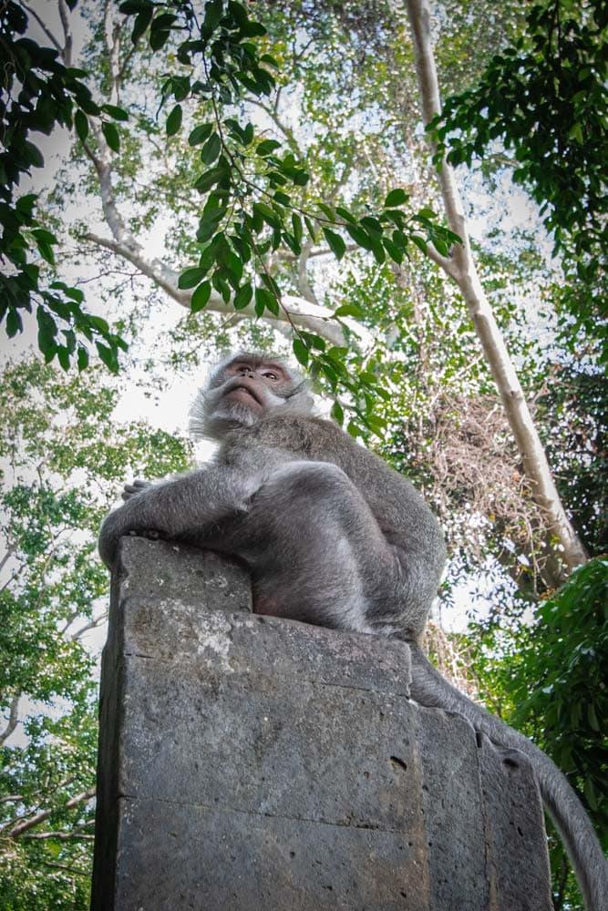 bali-bucket-list---monkey-on-a-stone