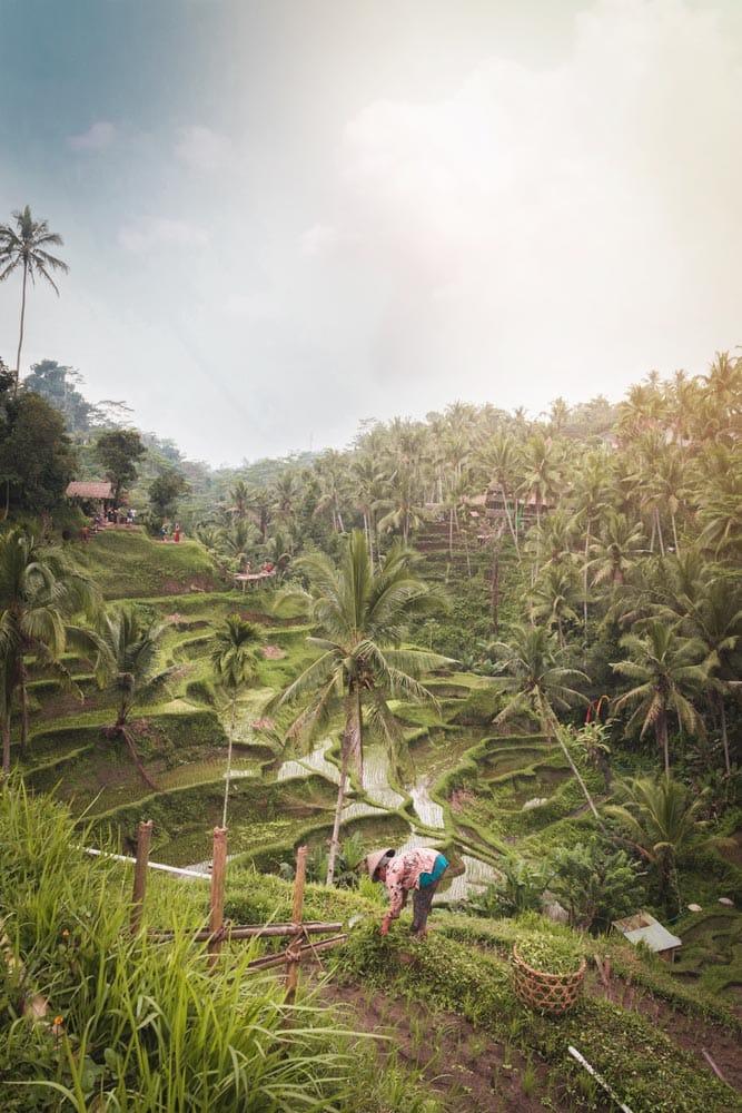 bali-bucket-list-rice-terraces-at-sunrise