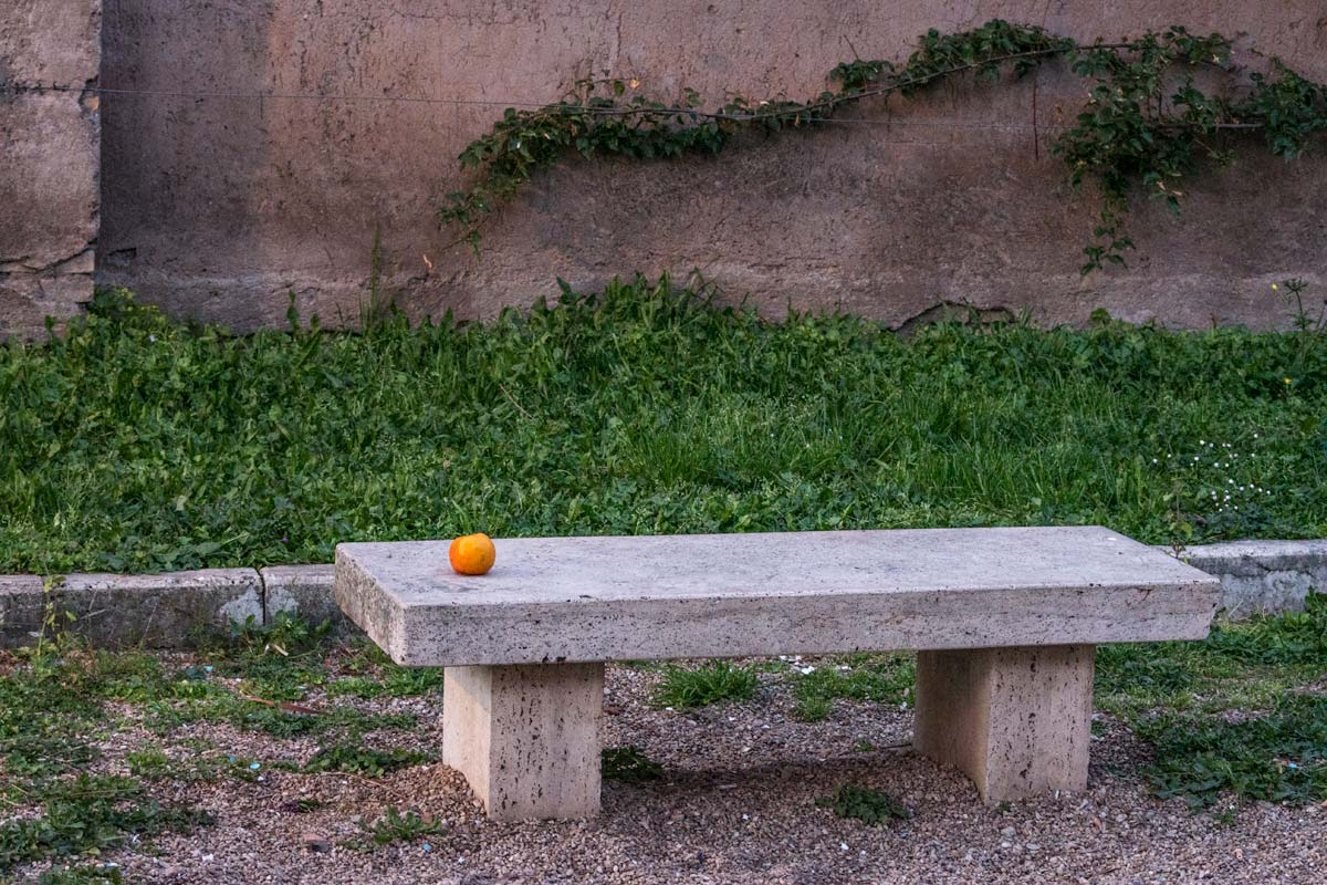 bench-with-an-orange
