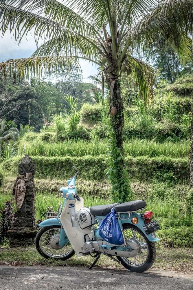 blue-scooter-in-the-jungle